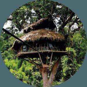 Gibbon Experience au Laos