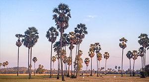 Etapes autrement cambodge